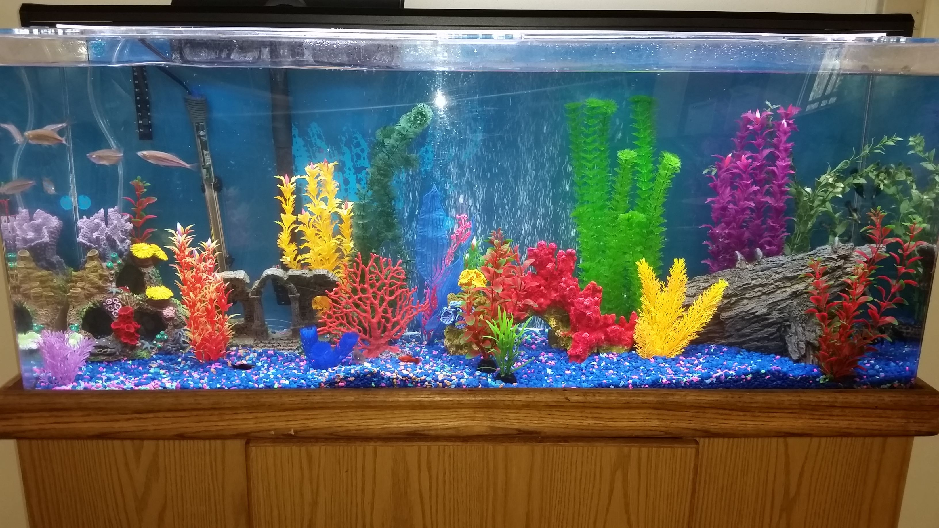 awesome pico reef tank reef aquarium Pinterest