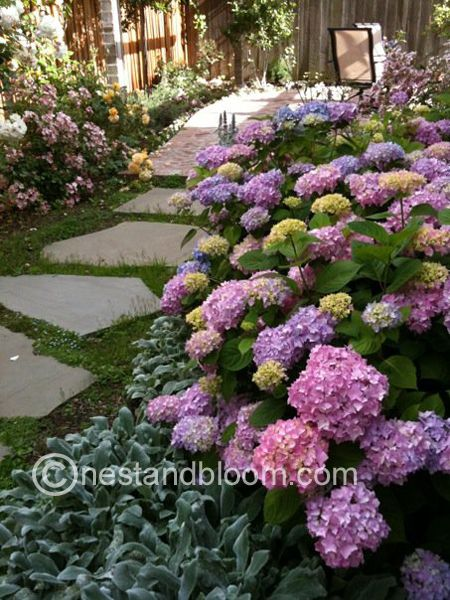 A Hydrangea Garden