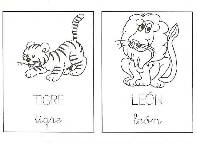 tigre,león