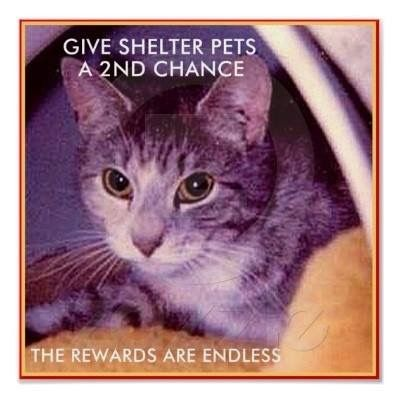 Pin on Second hand animals make first class pets... Please