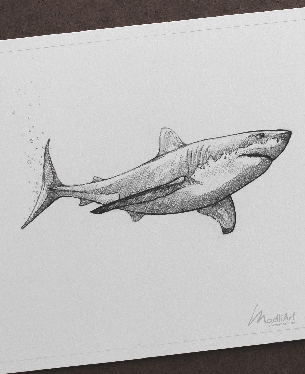 Акула картинки карандаш