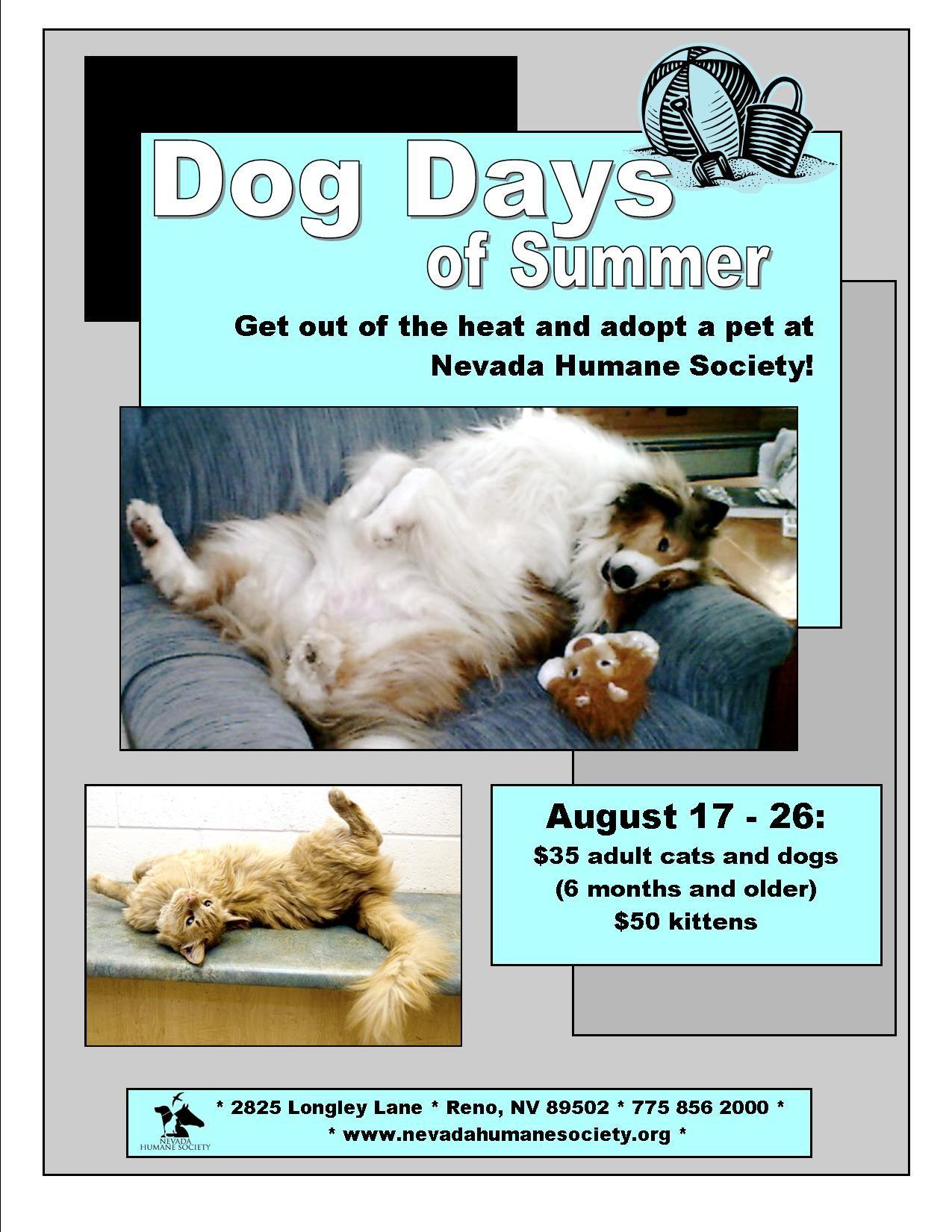 Increase Adoptions Adoption, Cat shelter, Humane society