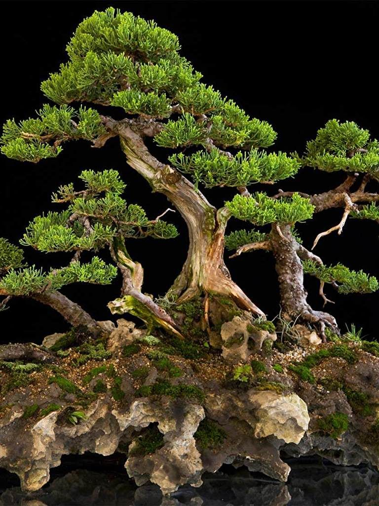 Amazing Bonsai 1920x1080 Wallpapers Amazing Bonsai 1920x1080 Wallpaper Reddit Wee To Wallpaper An Excellent Place To Find Every Type Of Wallpaper P Phong Cảnh
