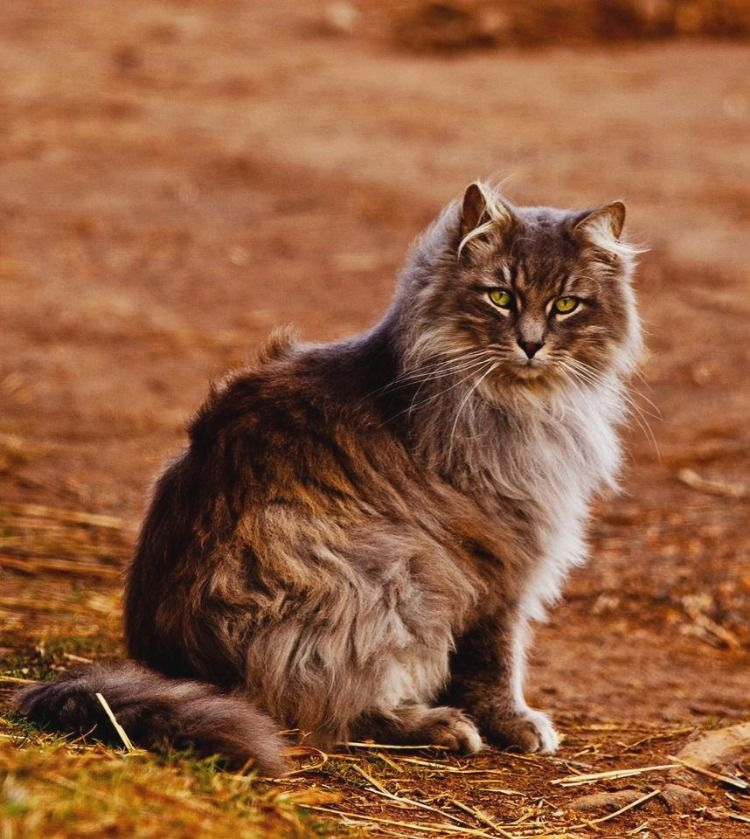 Nothing Found With Images Forest Cat Norway Forest Norway Nature