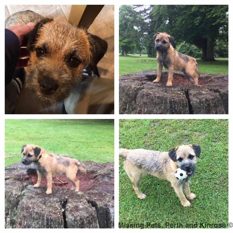 Monty Montywoof Twitter Border Terriers Border Terrier