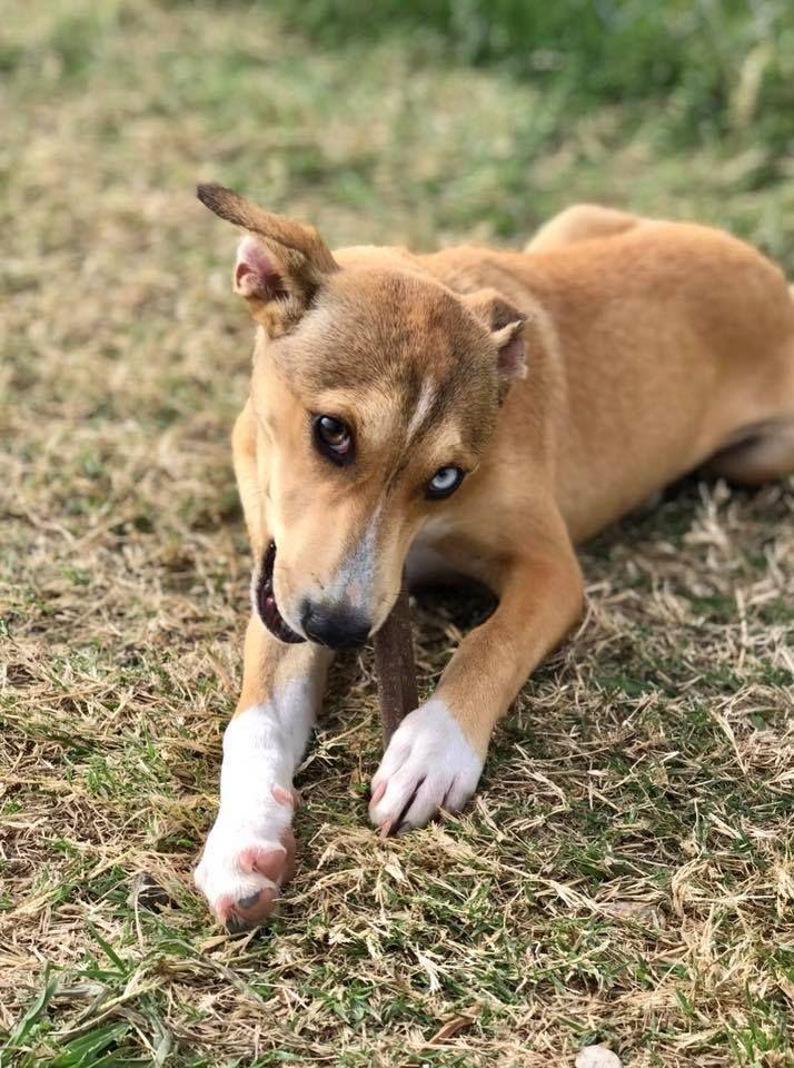 Adopt Tootsie on Pets, Animals, Dogs