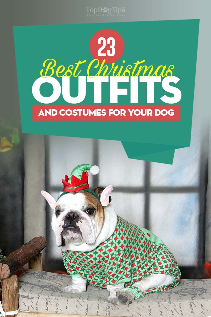 23 Dog Christmas Outfits And Costumes For Upcoming Holidays Best