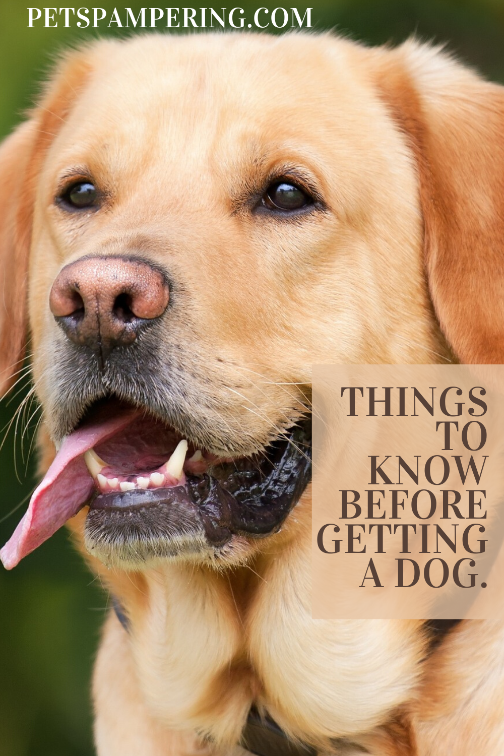 In this post I will discuss essential dog needs other than food and water that are equally important and also share with you people required products that every dog owner should have to fulfill their dog's needs. #dogsofinstagram #dogs #dogstagram #dogsofinsta #dogsofig #dogsitting #dogslife #dogsofinstaworld #dogscorner #dogsofinstgram #dogsandpals #dogslover #dogstyle #dogsarefamily #dogselfie #dogsofnyc #dogsrule #dogsonadventures #dogsoninstagram #dogsofcanada #dogsoflove