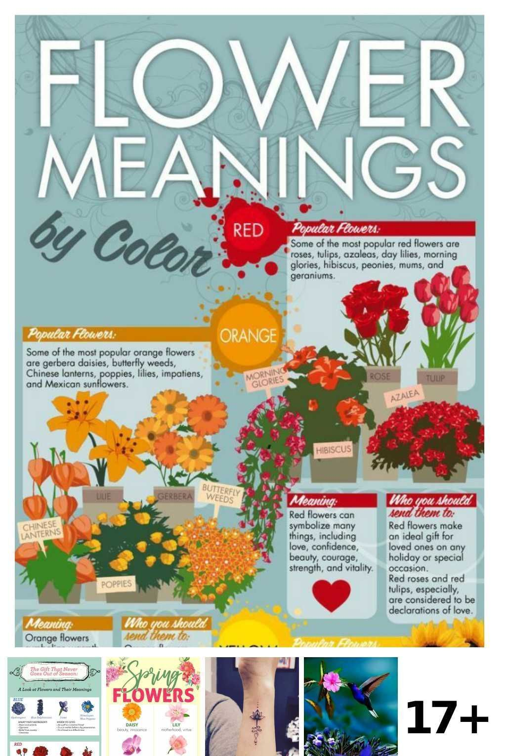 Pin On Flowers Meanings