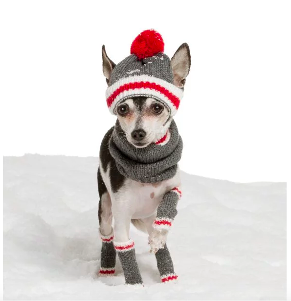 29 Gifts For The Spoiled Pup In Your Life   Pup, Gift and Dog
