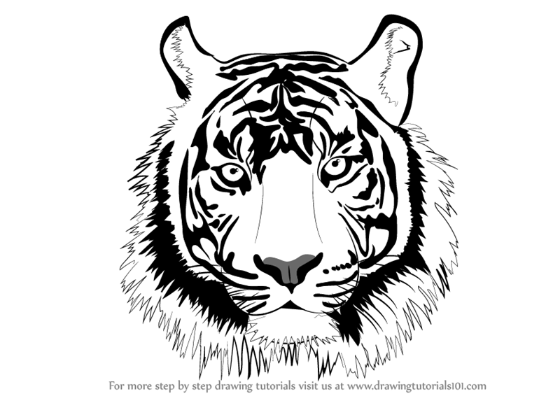 Learn How To Draw A Tiger Face Big Cats Step By Step Drawing Tutorials Tiger Face Tattoo Tiger Face Drawing Tiger Face