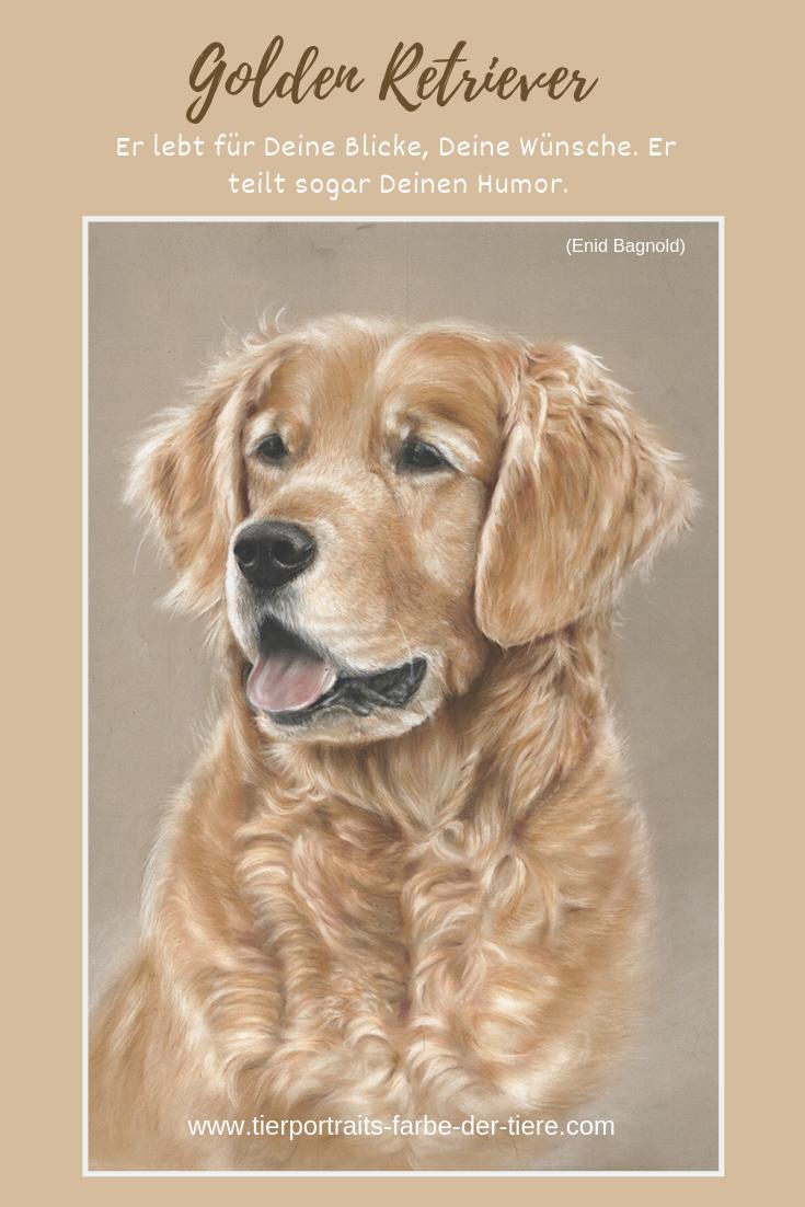 Auftragszeichnung Golden Retriever Tierportrait Tierzeichnung