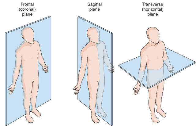 Human Anatomy Planes Anatomynote Anatomy Terminology
