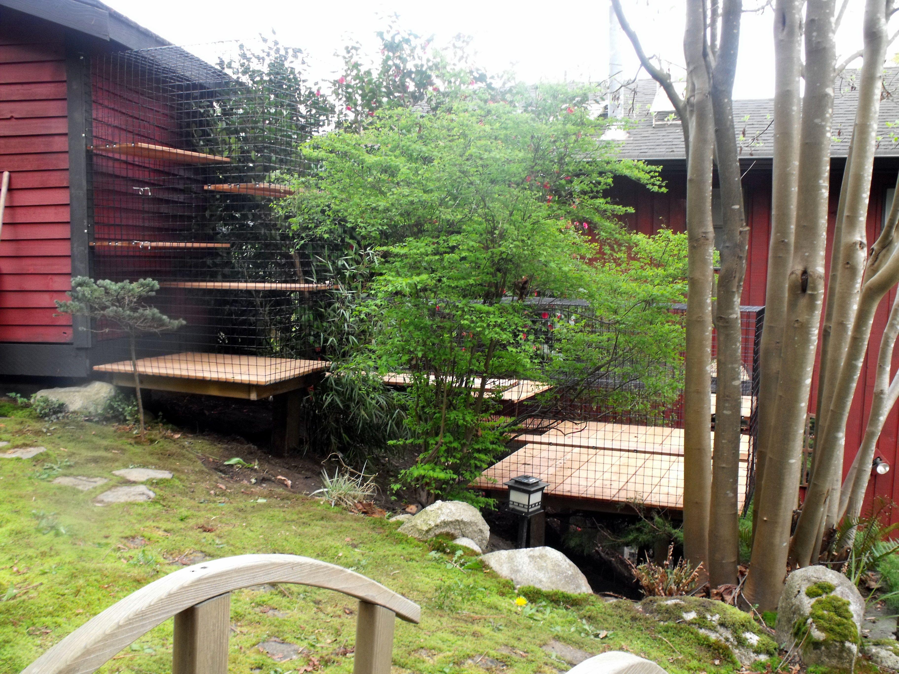 large outdoor cat enclosure beautiful world living environments