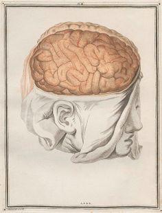 From Traité d'Anatomie et de Physiologie by Félix Vicq D'Azyr, 1786