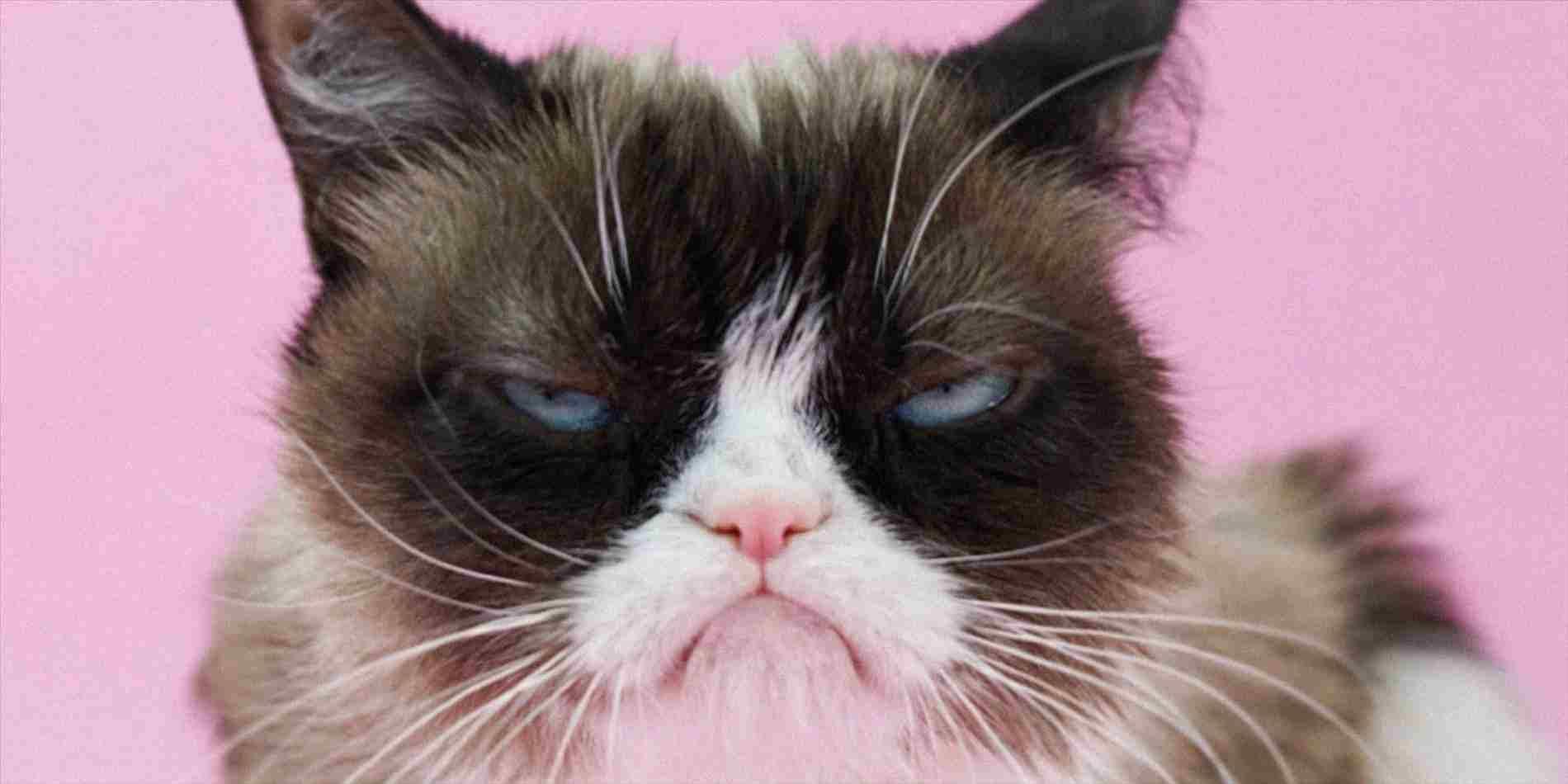 Grumpy Cat Birthday Card Beautiful Singing Gallery Free Cards