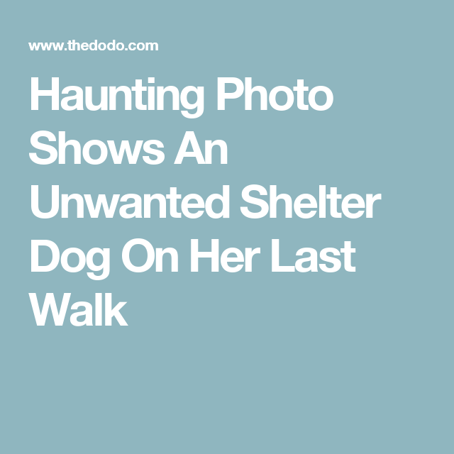 Haunting Photo Shows An Unwanted Shelter Dog On Her Last Walk