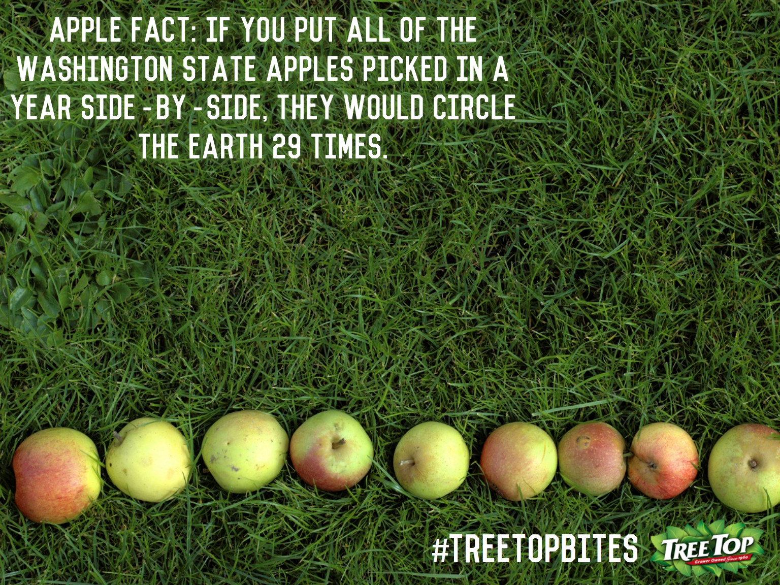 Wow That S A Lot Of Apples Nationalapplemonth Treetopbites Apple Facts Apple Apple Picking