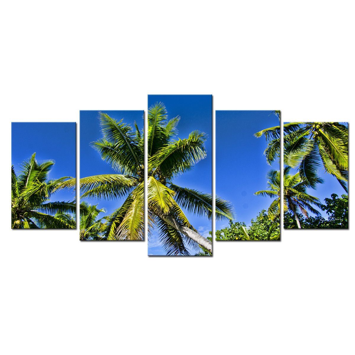 Niue palmsu by christopher doherty piece photographic printt on
