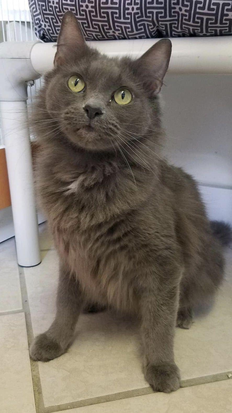 Adopt Aurora Your perfect companion on Feline leukemia