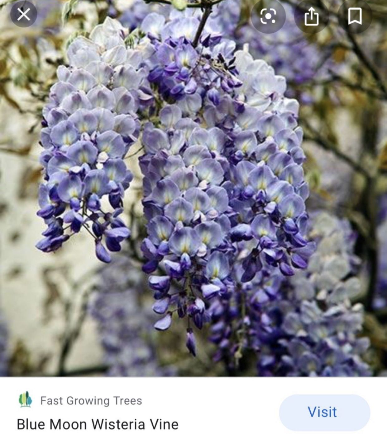 Schnellwachsende In 2020 Fast Growing Trees Wisteria Tree Wisteria Plant