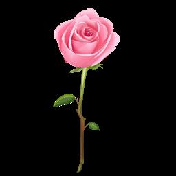 Pinkierosie Rose Clipart Cartoon Rose Rose Icon