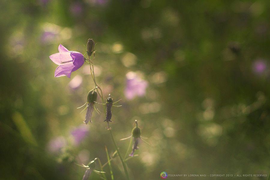 Purple in green by Lorena Masi on 500px