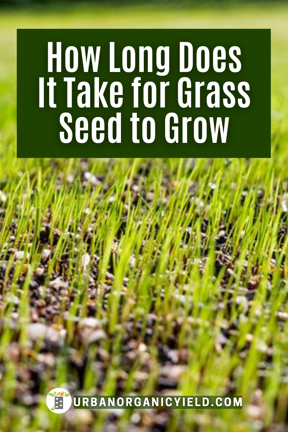 Grass Seed Tips How To Grow Fast Planting Grass Grass Seed Overseeding Lawn