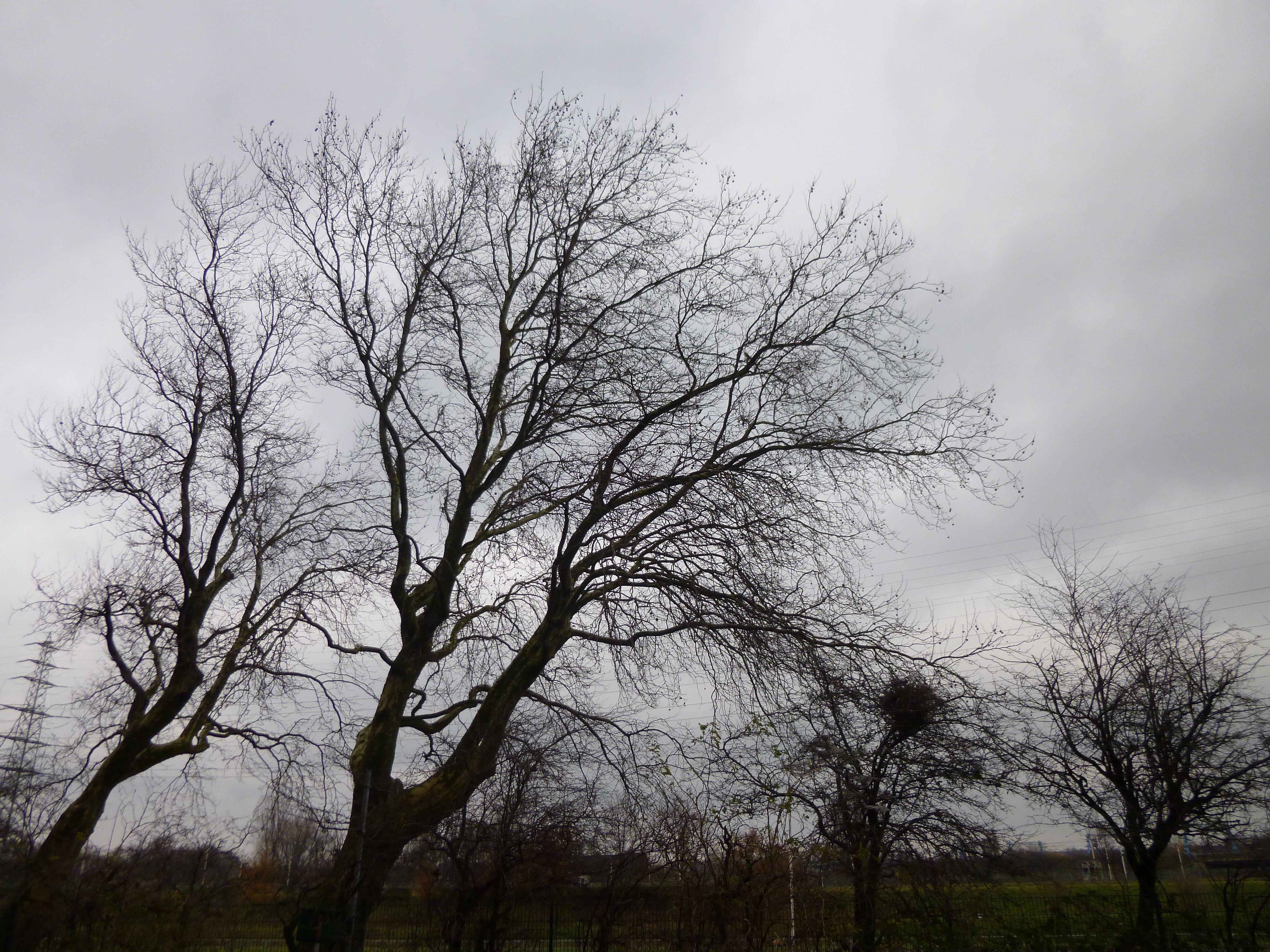 tree oberhausen