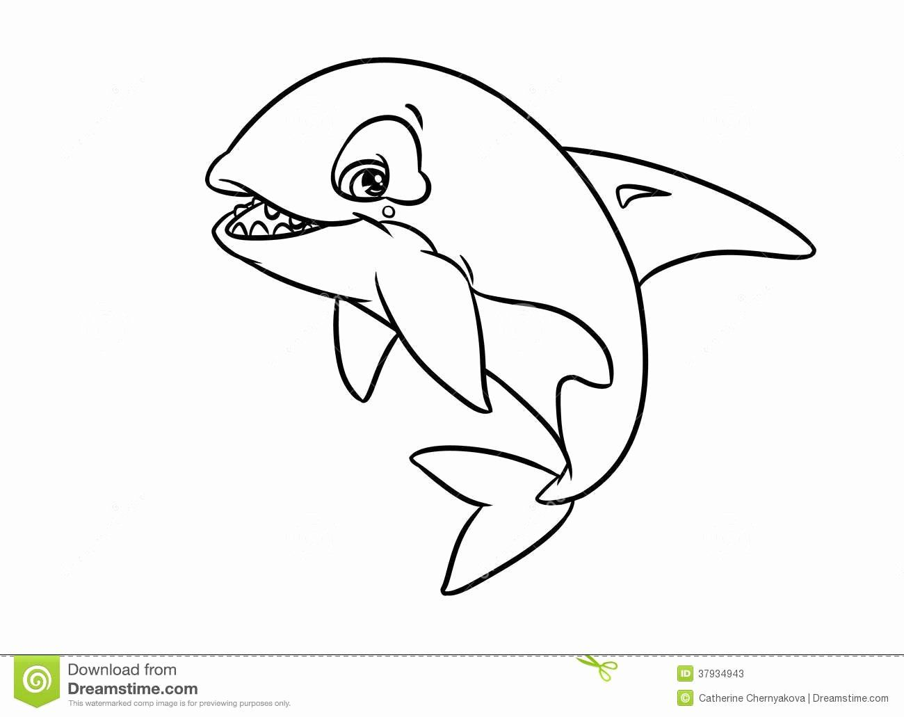 24 Orca Whale Coloring Page In