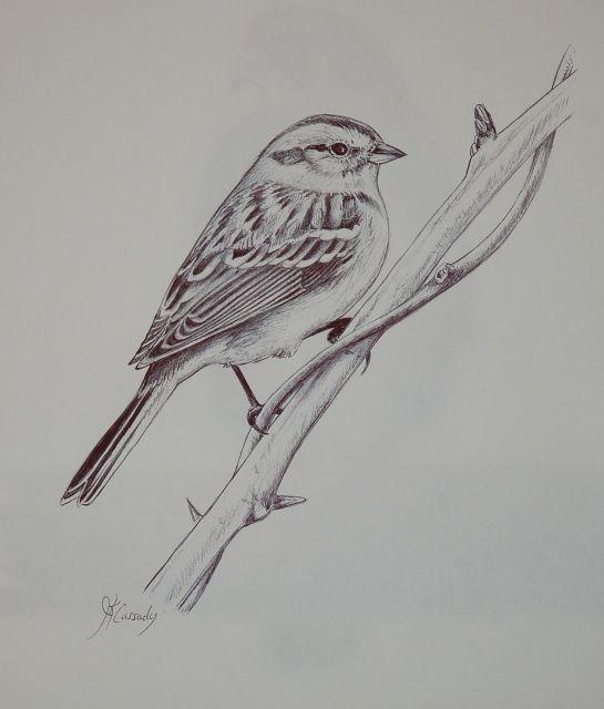 Sparrow Bird Drawing Bird Drawings Animal Drawings Bird Sketch