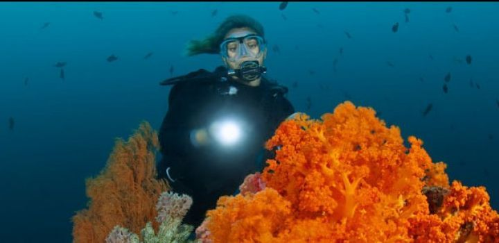 Murex Dive Resorts announce 'Passport to Paradise' package #scuba #diving #NorthSulawesi #Indonesia #BunakenNationalPark #BangkaIsland #LembehStrait