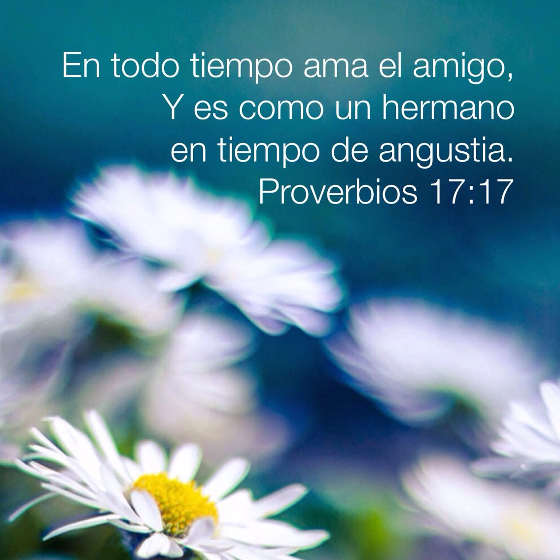 Proverbios amistad amor biblia   Mensajes bíblicos   Pinterest ...