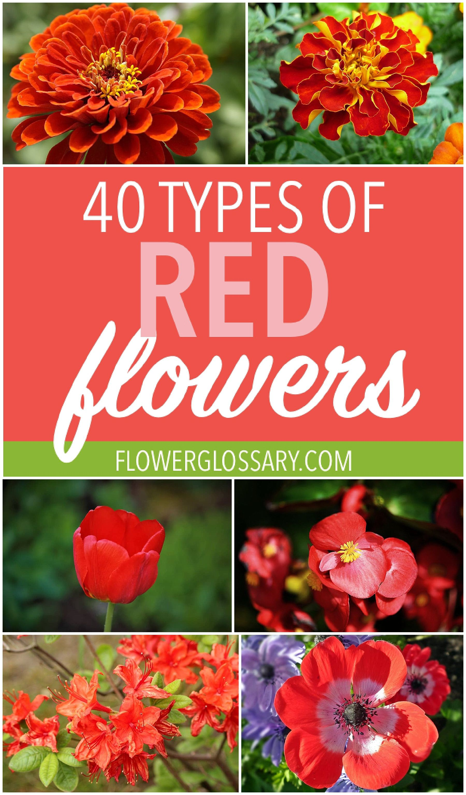 40 Types Of Red Flowers Types Of Red Orange Wedding Flowers Red Flowers