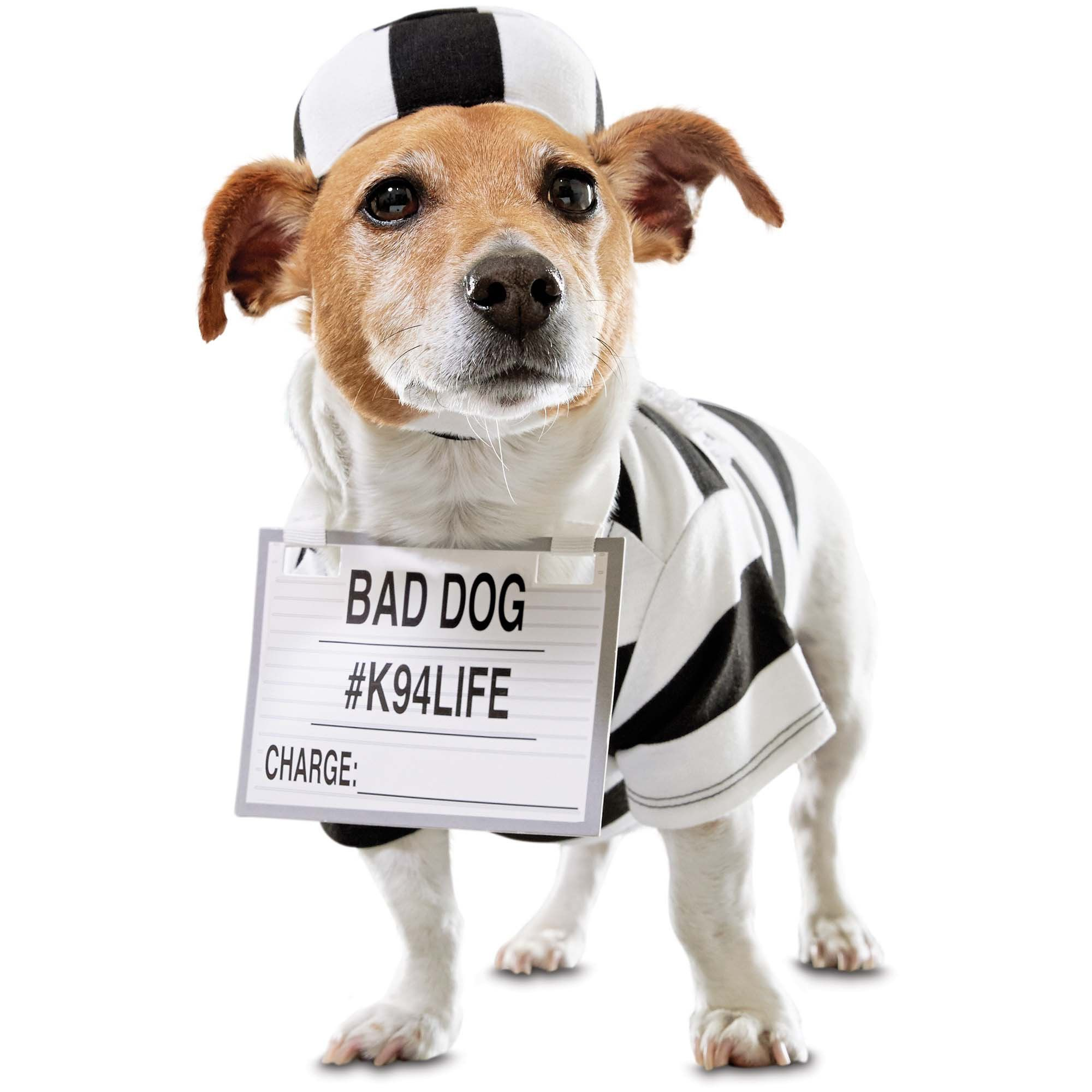 Find Your Pup Guilty With The Bootique Pug Shot Prison Dog Costume