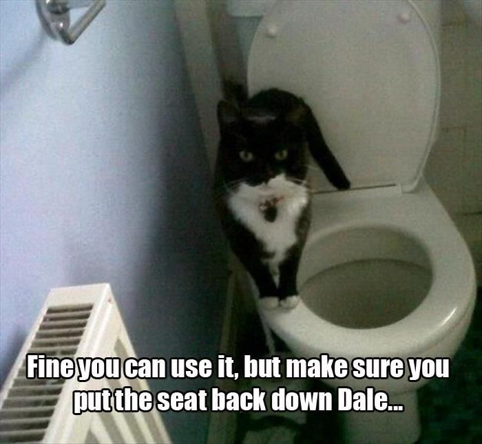 What Your Pets Are Really Thinking While They Watch You Go To The Bathroom 20 Pics Funny Animal Memes Your Pet Funny Animals