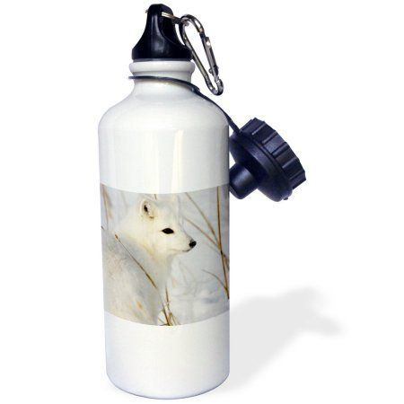 3dRose Canada, Manitoba, Churchill. Arctic Fox.-CN03 RJA0006 - Rebecca Jackrel, Sports Water Bottle, 21oz