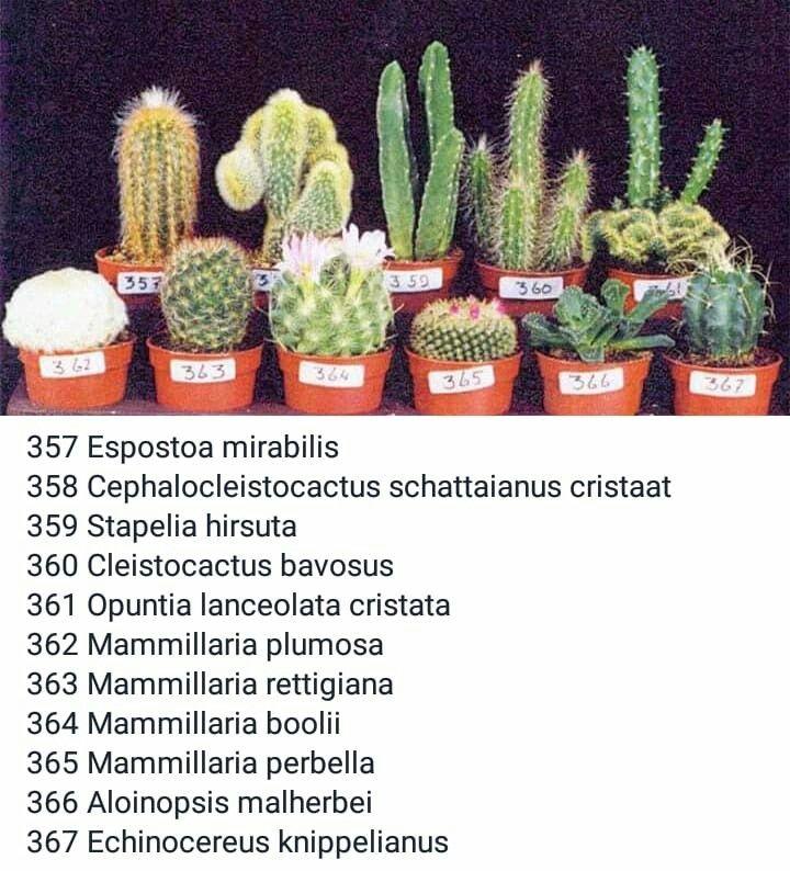 Cactus 선인장 cactus plants cactus types cactus names
