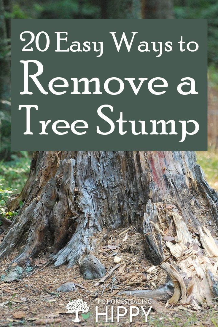 tree removal insurance bonded