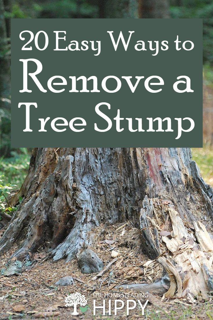 how to kill tree stumps naturally
