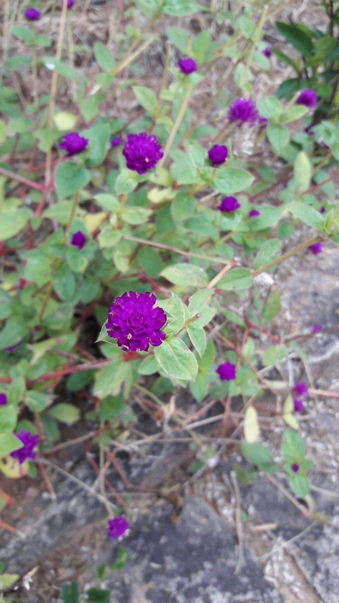 Pequenas flores...grandes belezas