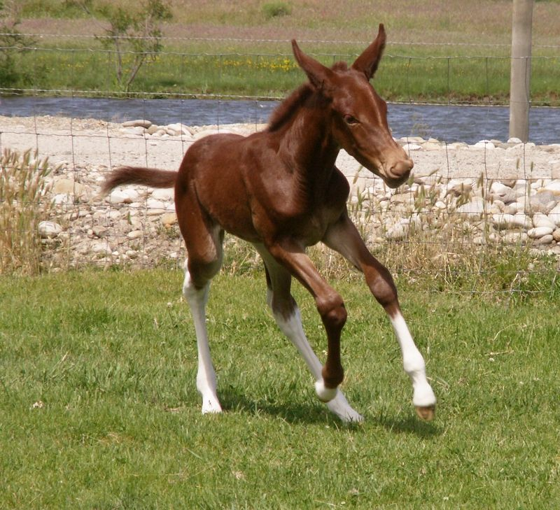 cute baby foals - photo #19