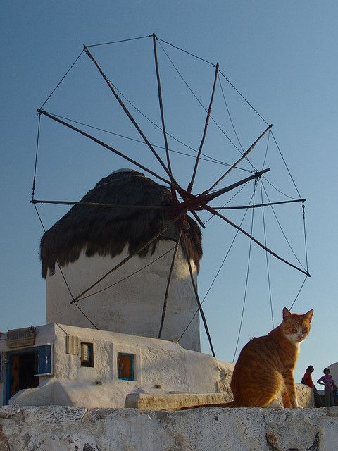 Mykonos cat and windmill by Dennis from Atlanta, via Flickr
