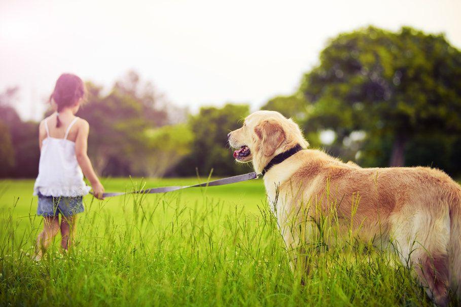 wallpaper. Niña con su perro.