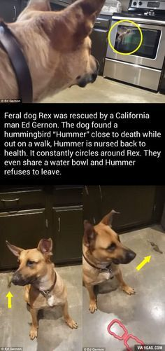 Httpssmediacacheakpinimgcomoriginalsf - These two stray puppies were just rescued and they refuse to stop hugging each other