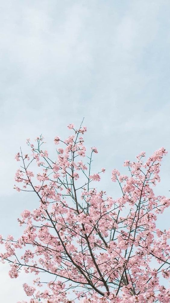 36 Elegant Flower Wallpapers You Need To Save Page 8 Of 36 Soopush Flower Background Wallpaper Cherry Blossom Wallpaper Phone Wallpaper Pink