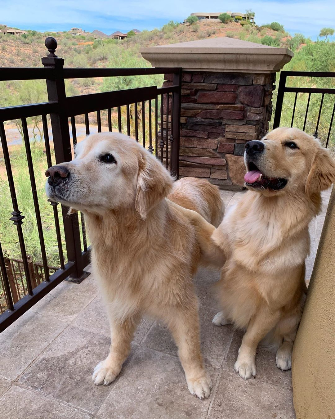 My Dad Got Cody When He Was 17 Years Old Now 14 1 2 Years Later We Get To Meet Life Doesnt Get Better Dogs With Jobs Golden Retriever Puppy Golden Retriever