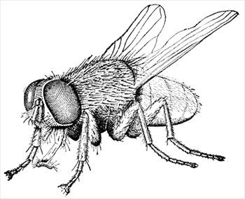 Free Housefly 2 Clipart Free Clipart Graphics Images And Photos Insect Art Insect Coloring Pages Fly Drawing