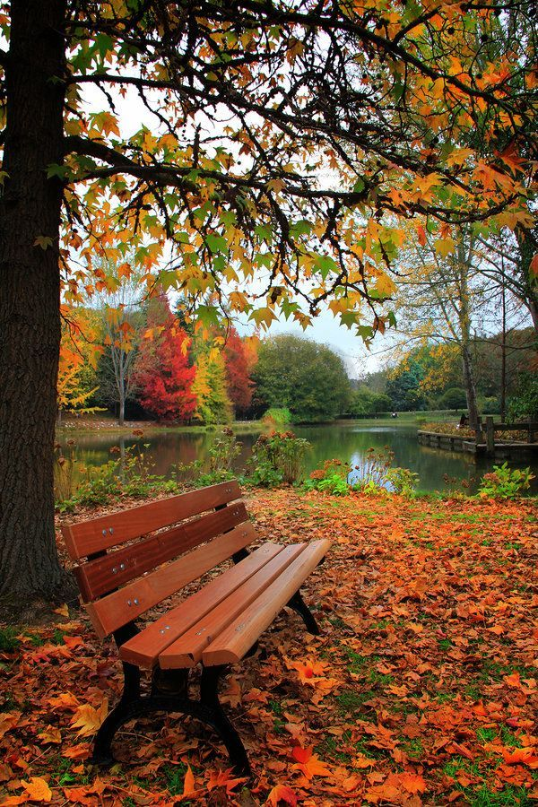 Bank / Gartenbank / Parkbank - Bench in the Park / Garden Bench - Herbst / Autumn / Fall