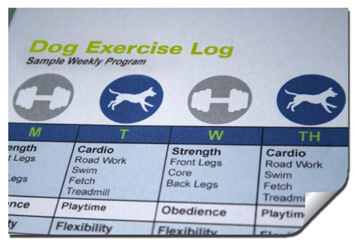 Dog Exercise Log Weekly Program With Images Dog Exercise
